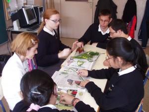 clasificando hojas